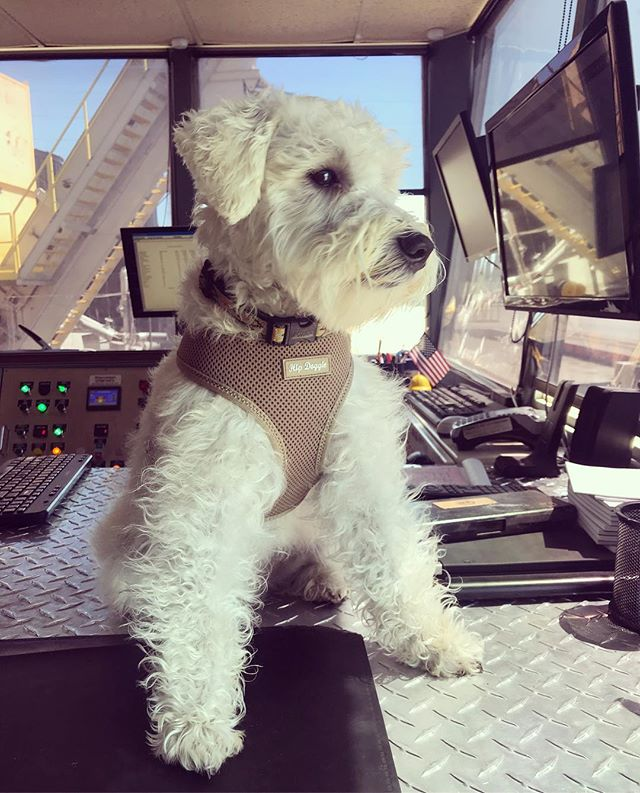 Supervision by Freddie— Are the laydown crews done? Grood. Trucks are bringing rock on the way in? Grood.  Bring 'em on home, I'm ready for pets 🐶❤️