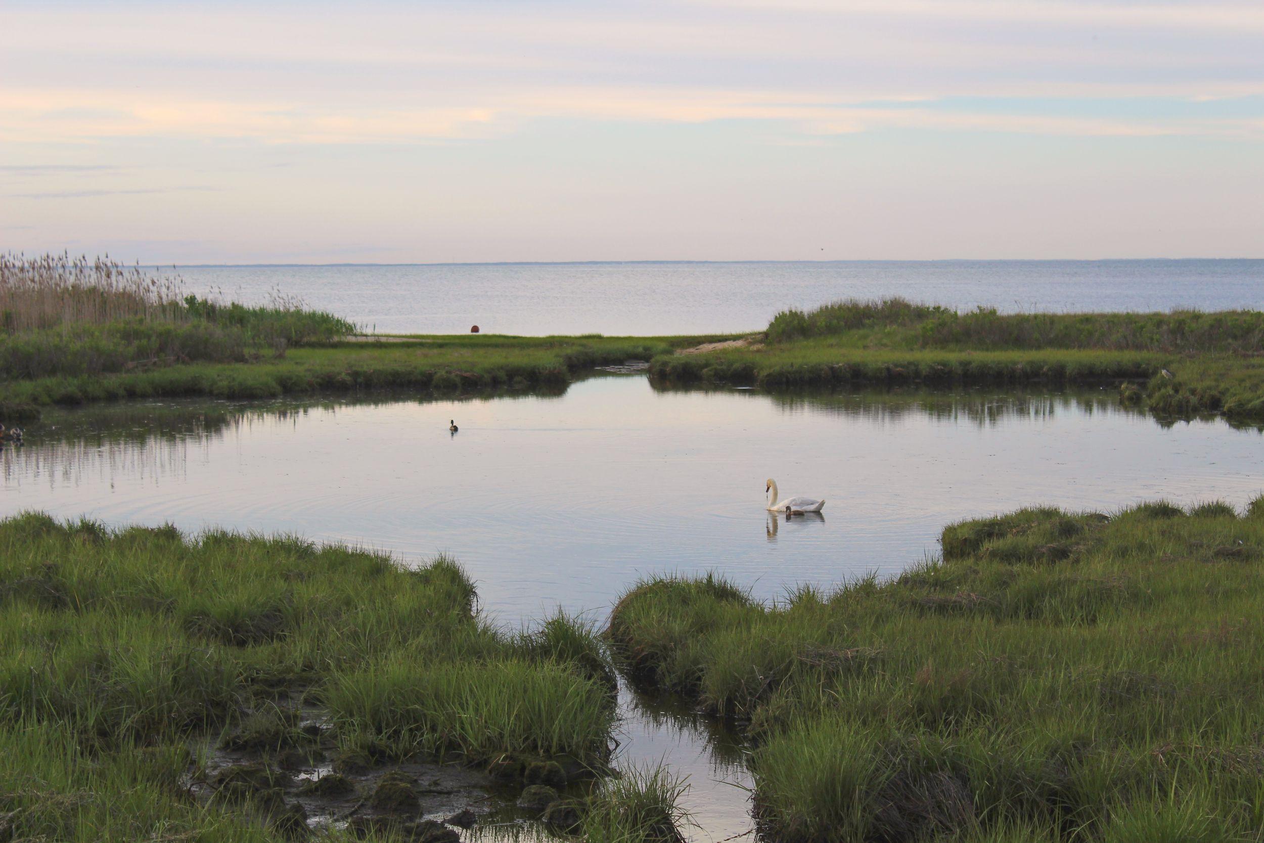 Sheriffs_Meadow_Sea_Grass_Lagoon_Marthas_Vineyard_Swan_Sunset.jpg