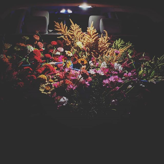 These harvest nights go so late, but it always feels so good to see the car loaded up with all these blooms! We are really in the thick of it with some incredible amaranth stems this week. Really feeling gratified and thankful for our team that has been able to get this all up and running this year.  Contact us at info@cutleafblooms.com if you want some! We should have plenty this week. In the meantime, I'll be napping. . . . #cutleaf #cutleafblooms #cutflowers #botanicalbois #gaygardens #amaranth #zinnia #cosmos #celosia #gomphrena #local #houston #localcutflowers #ayearinflowersweek26 #ayearinflowerszone9 #juneinhouston #latenights