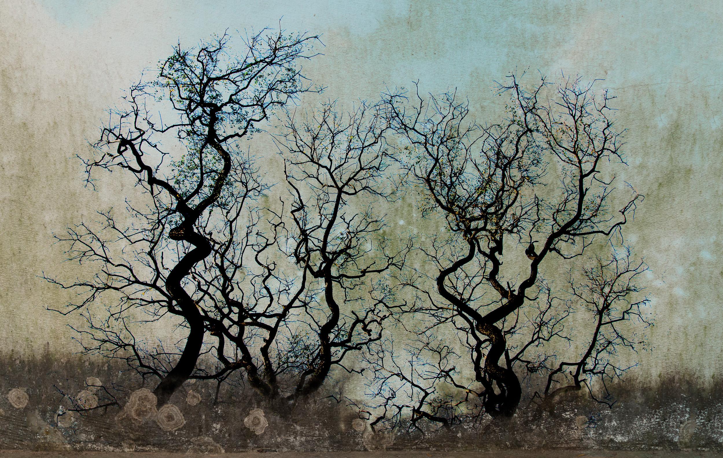 Tres Arboles / Three Trees