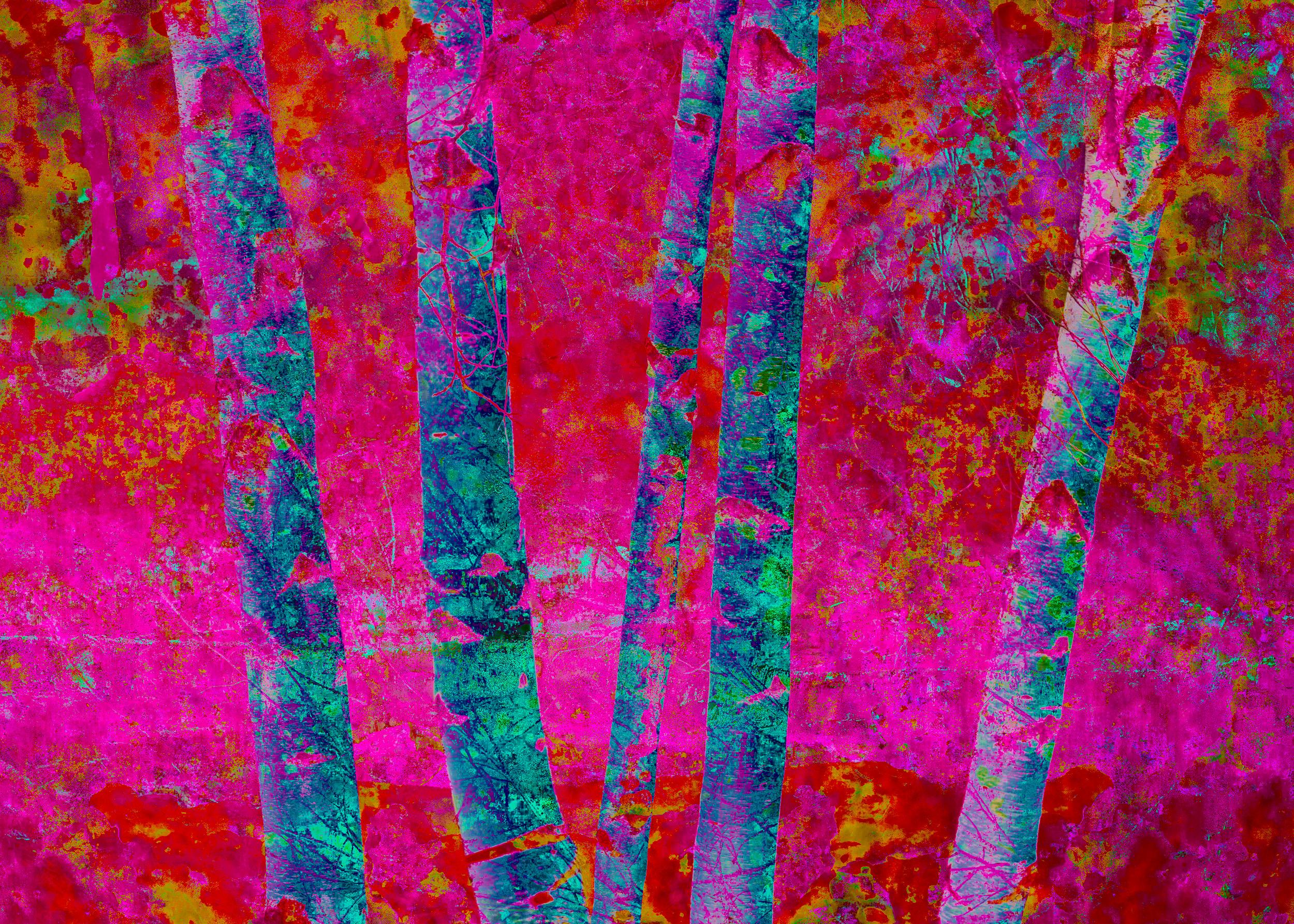 Magenta Birches
