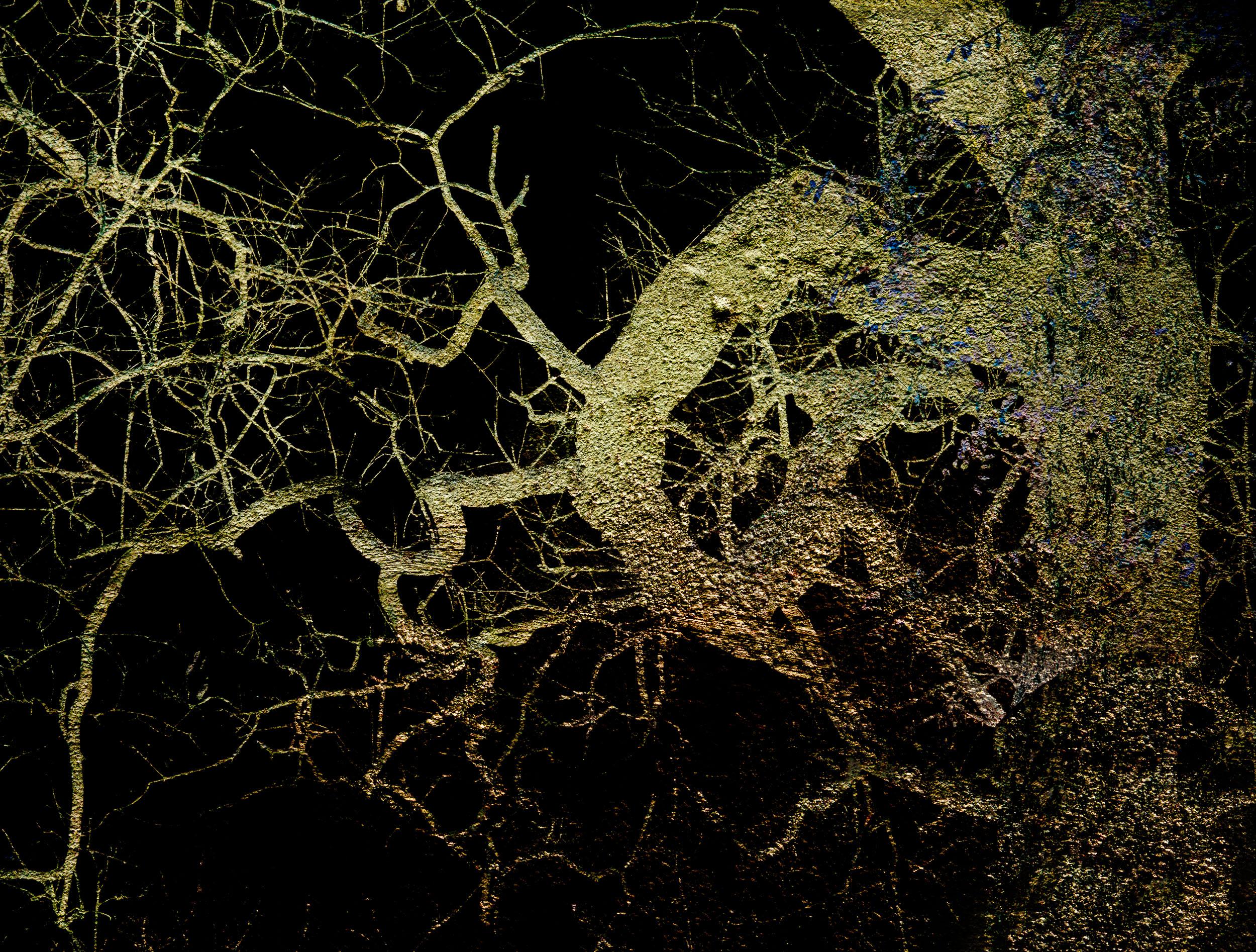 Ramas Torcidas IV / Twisted Branches IV