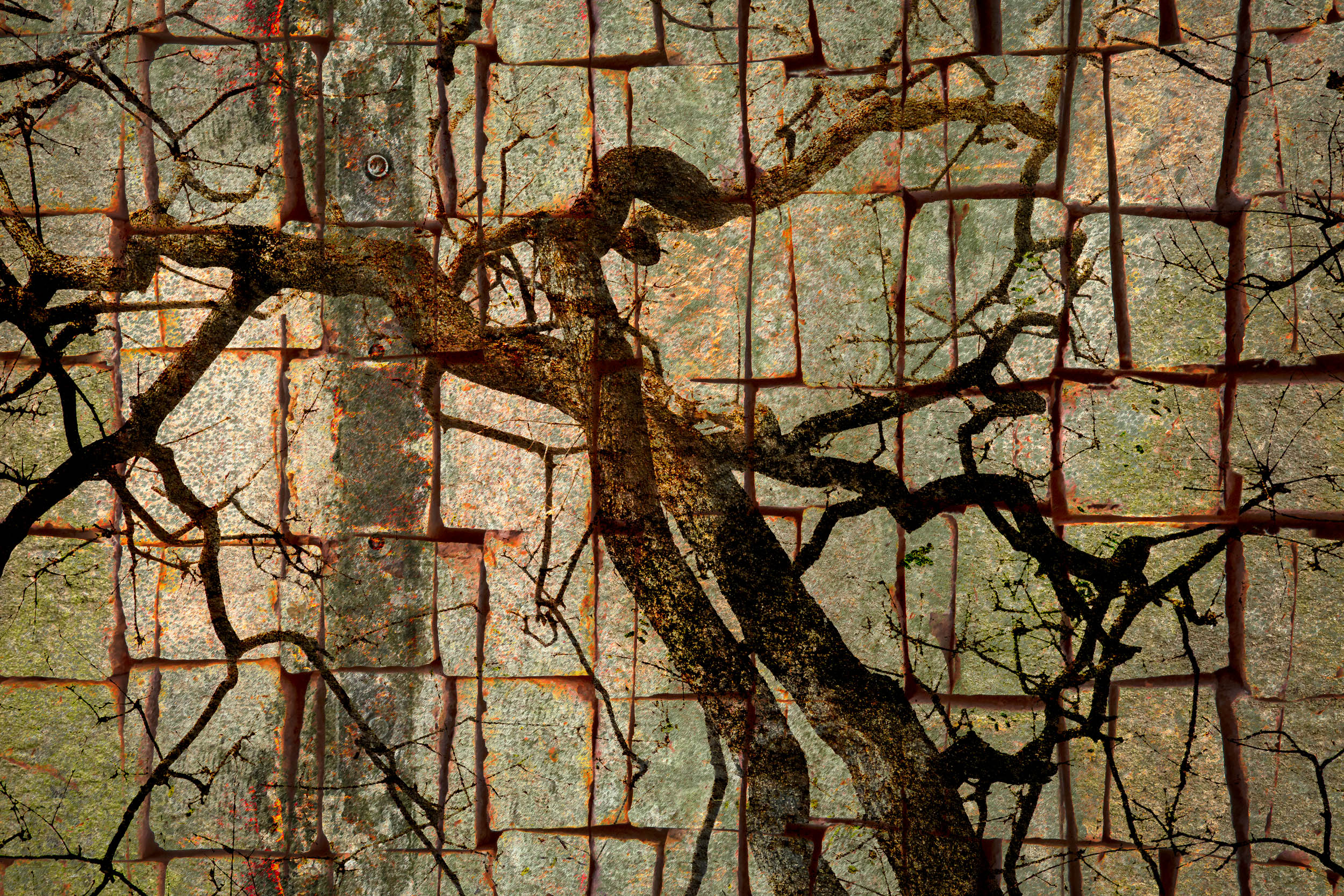Ramas Torcidas VII / Twisted Branches VII