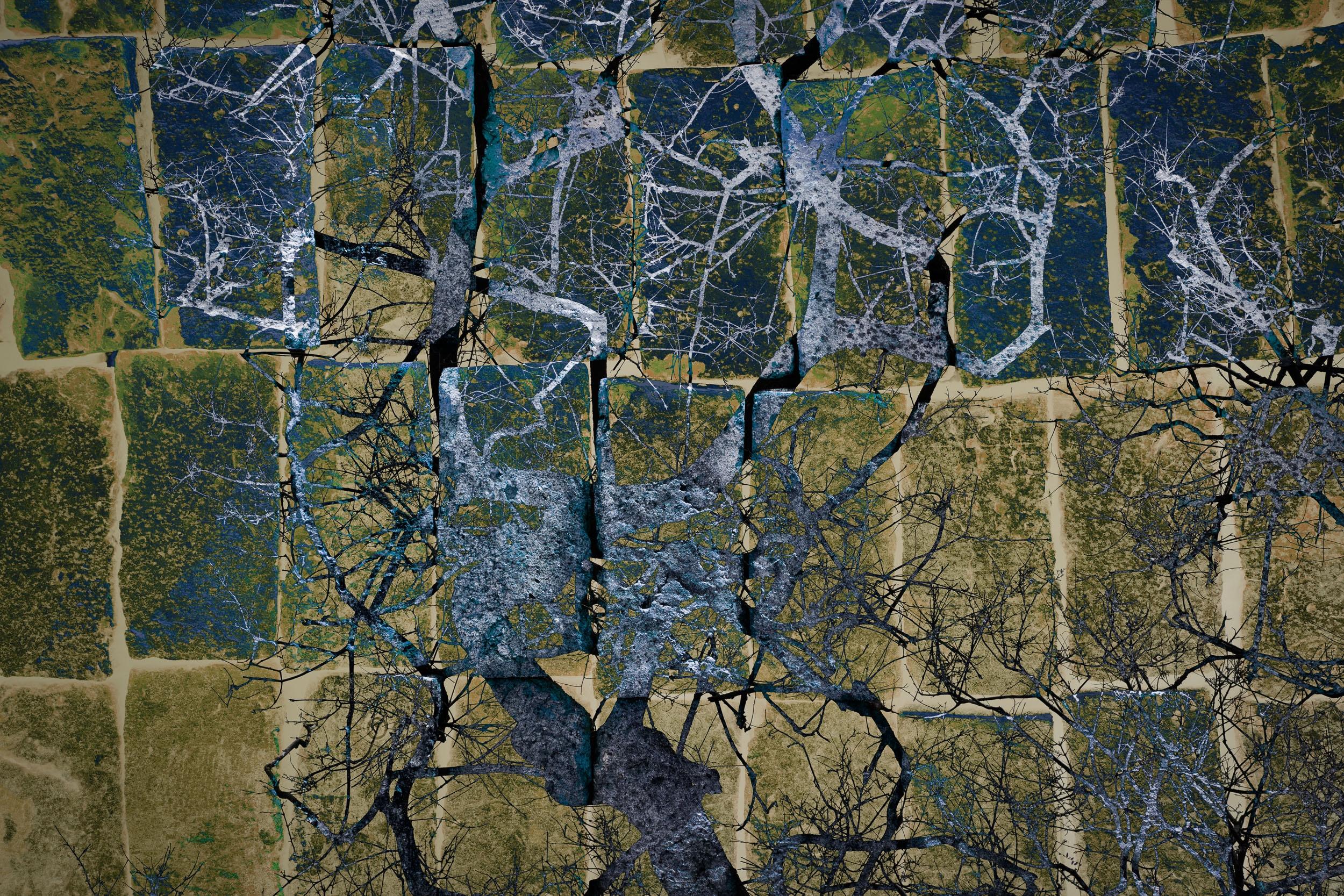 Disappearing Trees III /Árboles Desapareciendos III