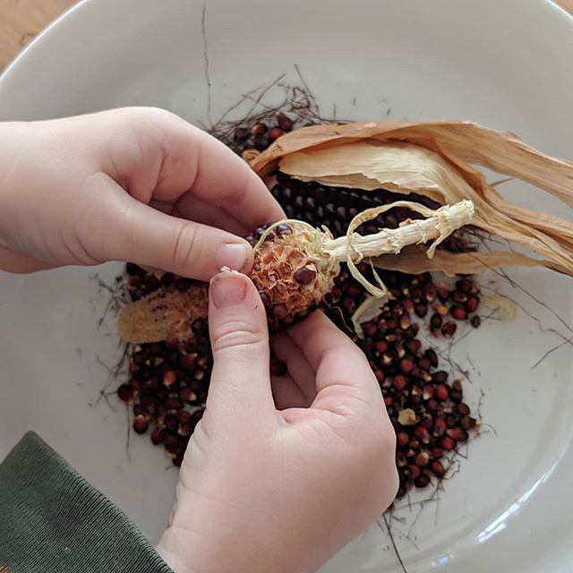 "little fingers curiously (inherently) helped mama pop dry beans from their curled bean homes, speckled or brown, yellowed shell or deep and purple, crackling with delight under pressure. ""these are seeds for our garden and to share,"" said mama, smirking as kernels pinged around us. ""try to keep them in the bowl."" ""I'm going to plant one now,"" the little one says, and hops up with kernels nestled in his palms. ""but we have to wait for the spring."" unsure if he will continue on his planting mission or if he will return to the table to winnow and ponder. ... seeds and food are so entwined in our daily life, I am so grateful that my children are able to know the life of their food. I would so much love to make this true for all people.  #growyourown #gardening #seedsaving #wildandfree #learningislife"