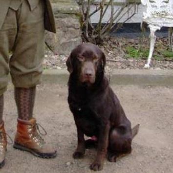 "Colonel Nut of Grangemead, ""Bruce"" -    Profile    -    Pedigree"