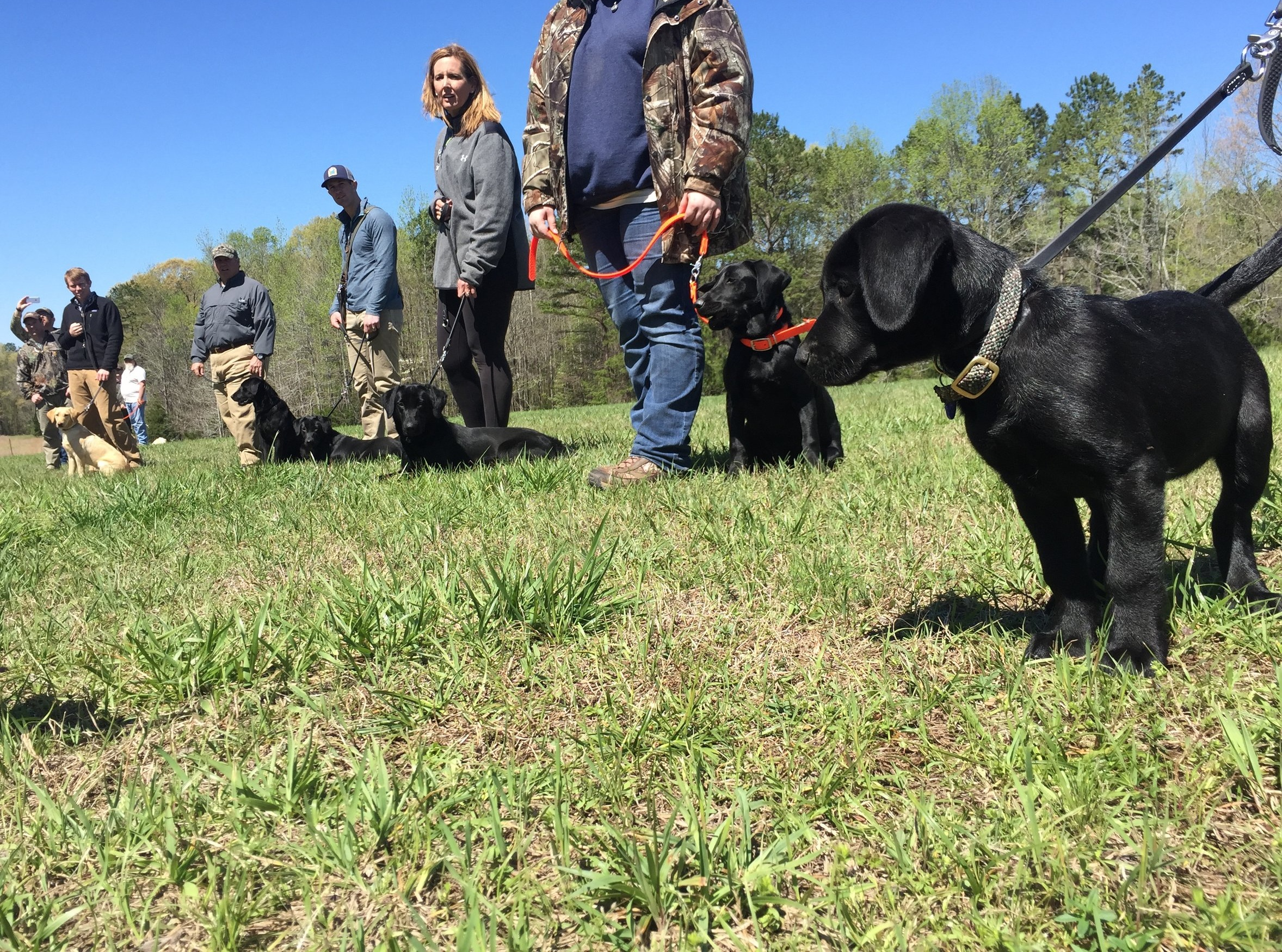 Starting Your Dog the Wildrose Way - Come learn what it takes to train a well-rounded, hunting or adventure partner. Topics include obedience, steadiness, promoting calm behaviors, patience, introduction to birds, memories, doubles, early marks, reading your pup, k-9 demeanor and much more. Bring your pup, all breeds are welcome.