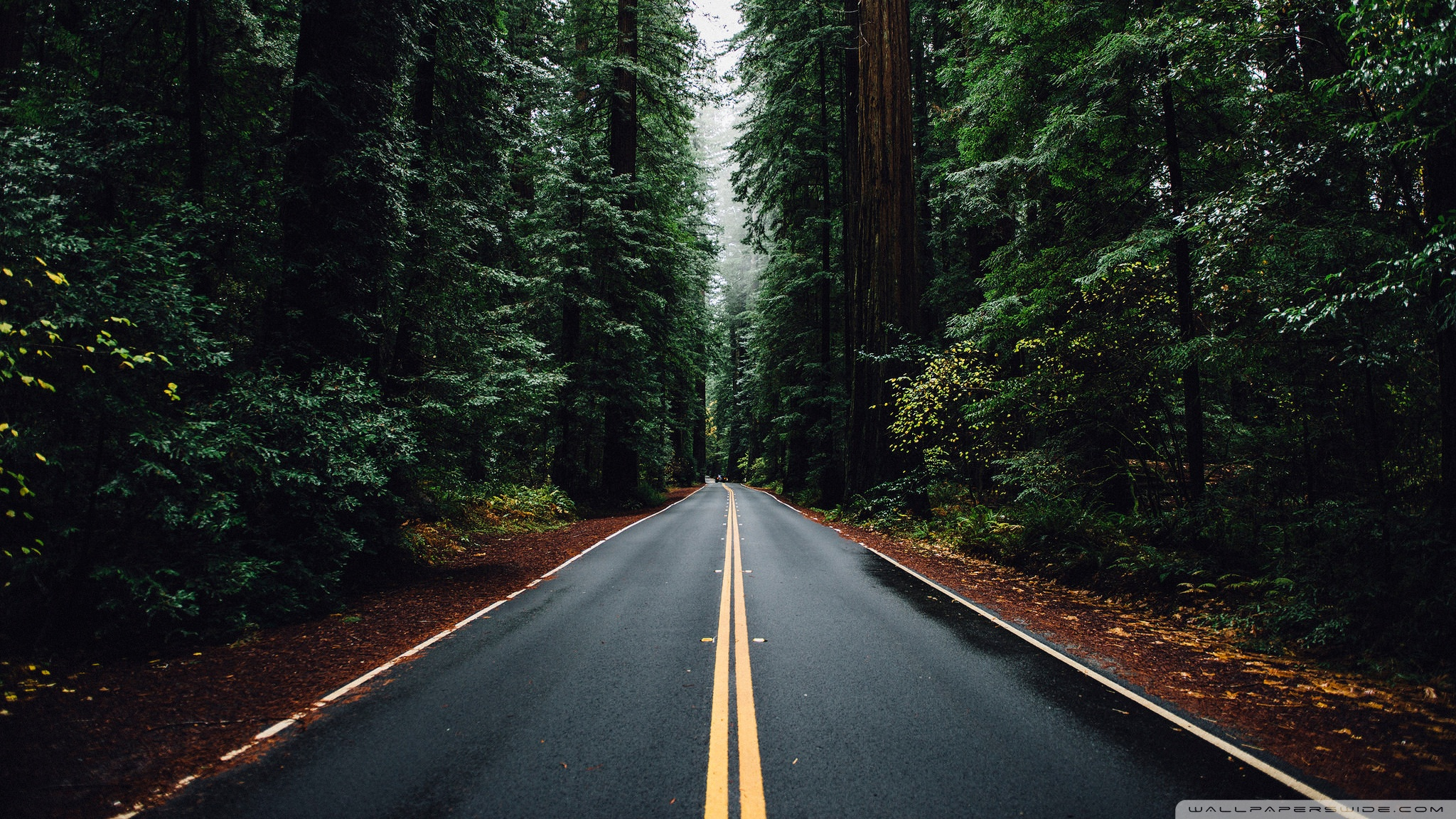 beautiful_road_3-wallpaper-2048x1152.jpg