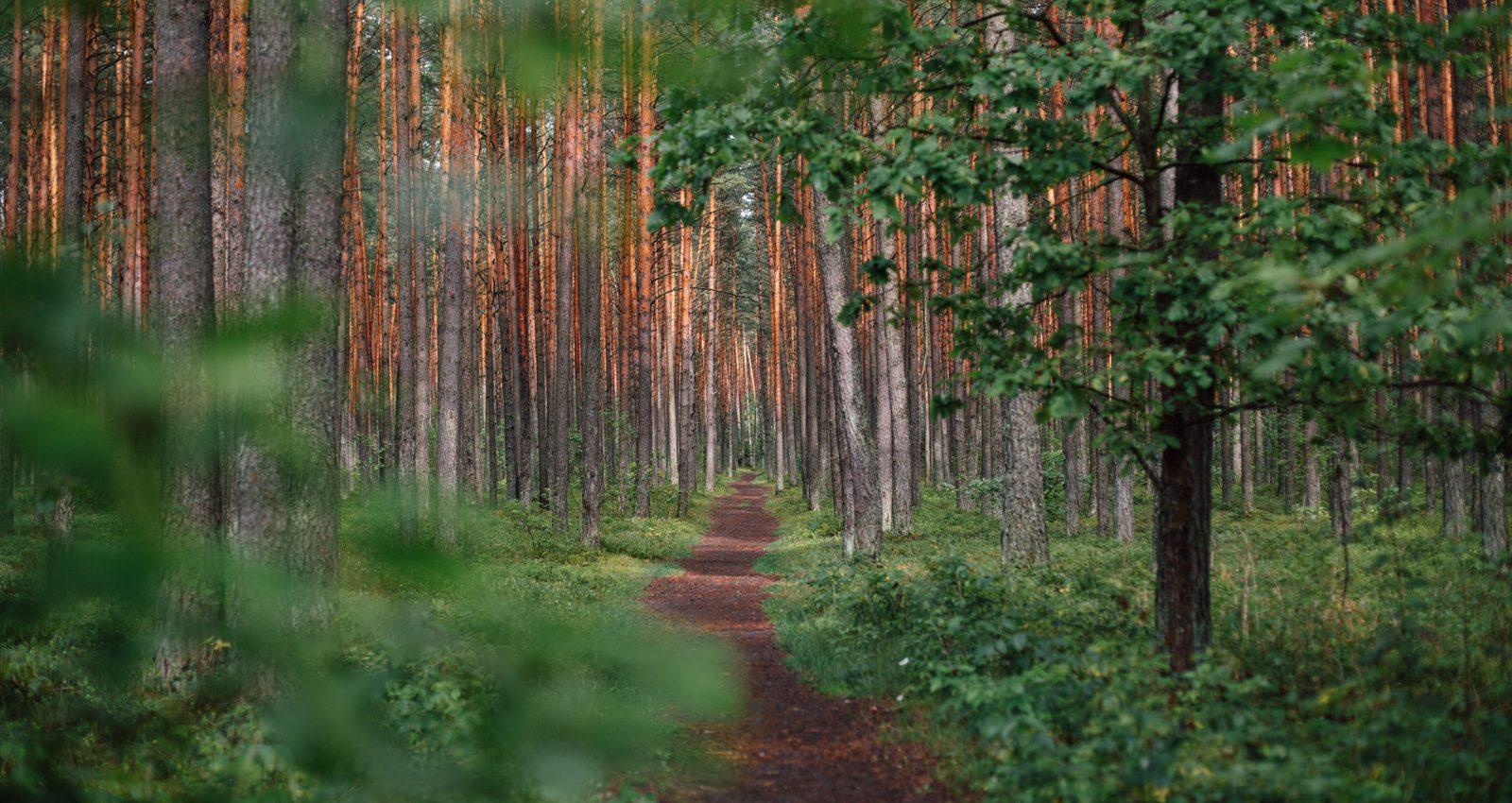 wooded_trail-1600x850.jpg