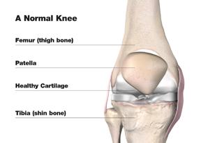 normal_knee_w.jpg