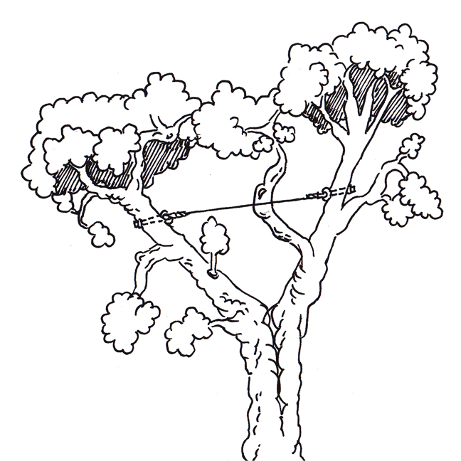 cable-tree-illustration_0001b.jpg