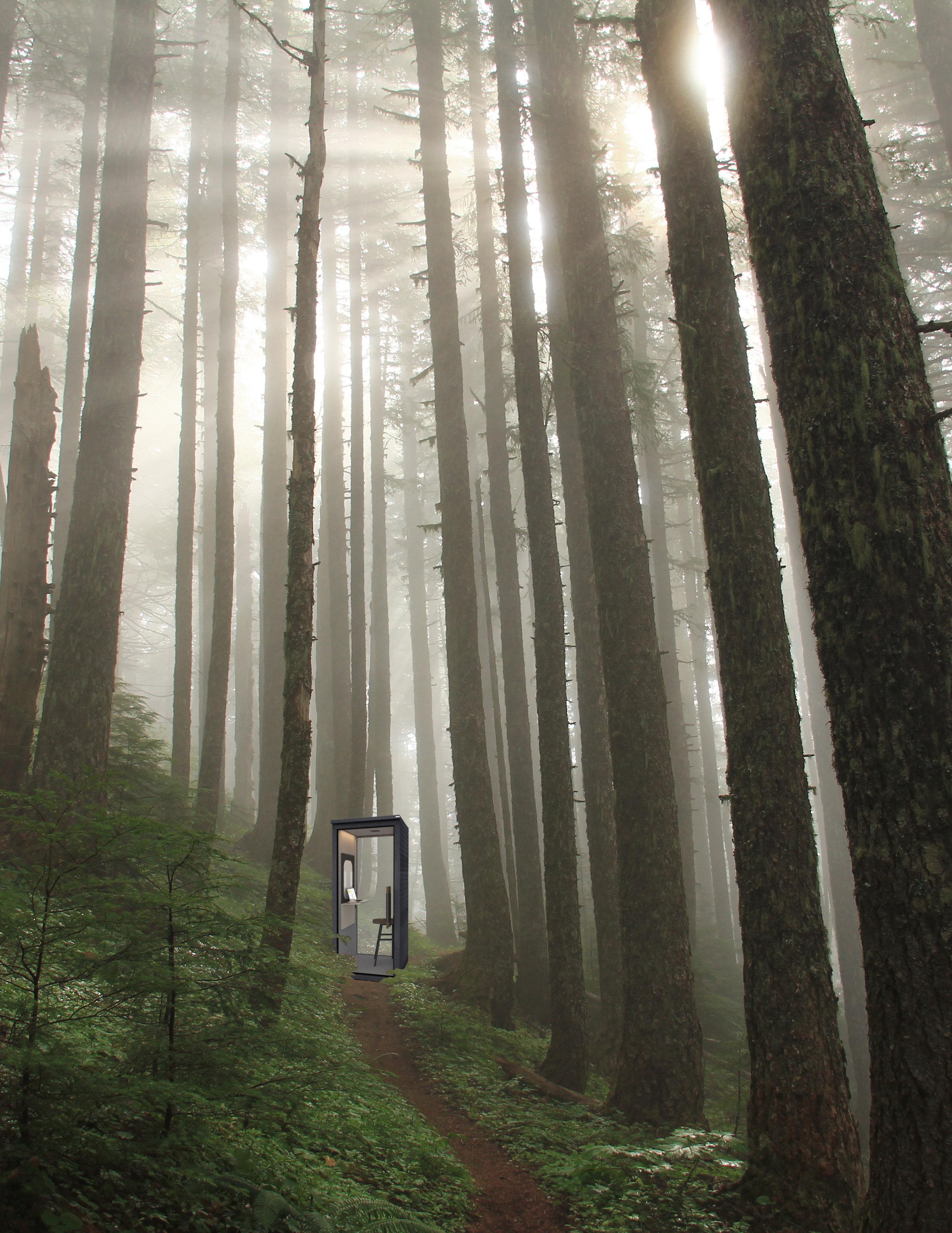 SOTO Forest.jpg