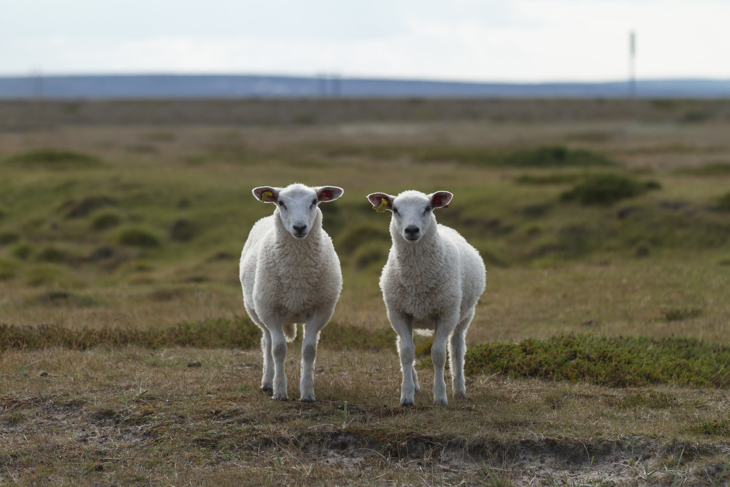 If these guys were separated at birth and one day came back to meet each other without knowing who the other was, would anyone give a good baa damn?