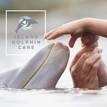 Copy of Island Dolphin Care