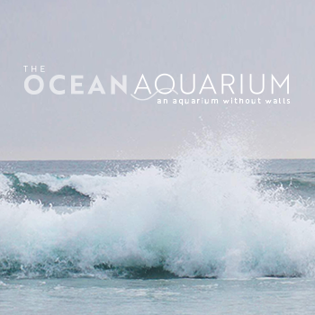 Copy of Copy of Copy of The Ocean Aquarium