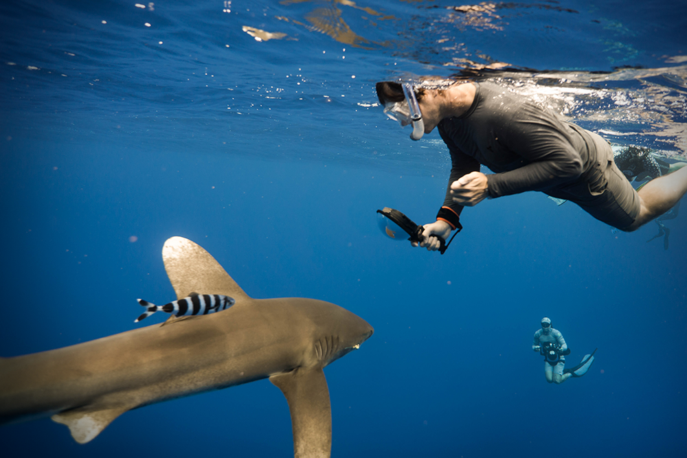 Oceanic White Tip: Mo'orea