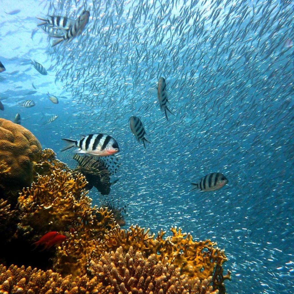 Ocean_Aquarium_Body3.png