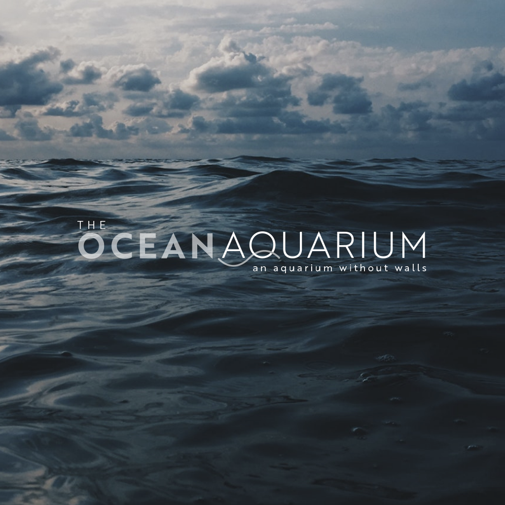Ocean_Aquarium_Body6.png