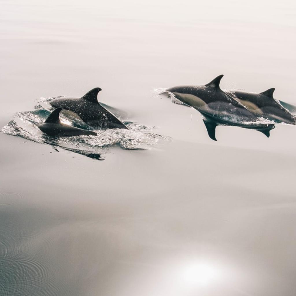 Ocean_Aquarium_Body7.png
