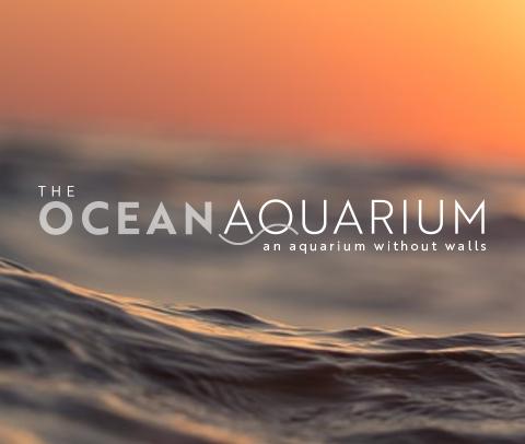 CJ_IDC_Ocean_Aquarium.png
