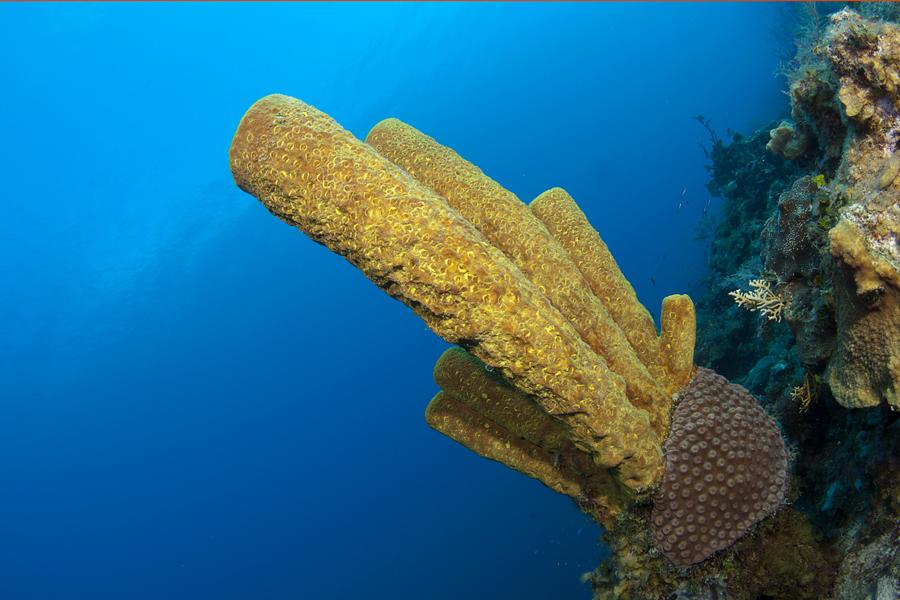 Turks & Caicos, Atlantic Ocean