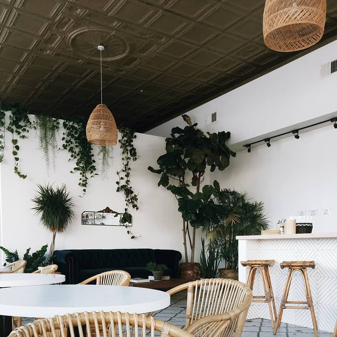 Plants in coffee shop 🌿.jpeg