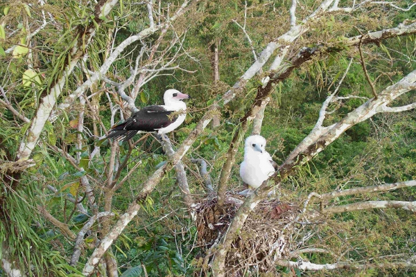 Figure 4.  Christmas Island is one of the most remote islands in the world. Yet, some of its seabird species are highly threatened and the reason for this are most likely human activities, like fisheries, marine pollution, and hunting.