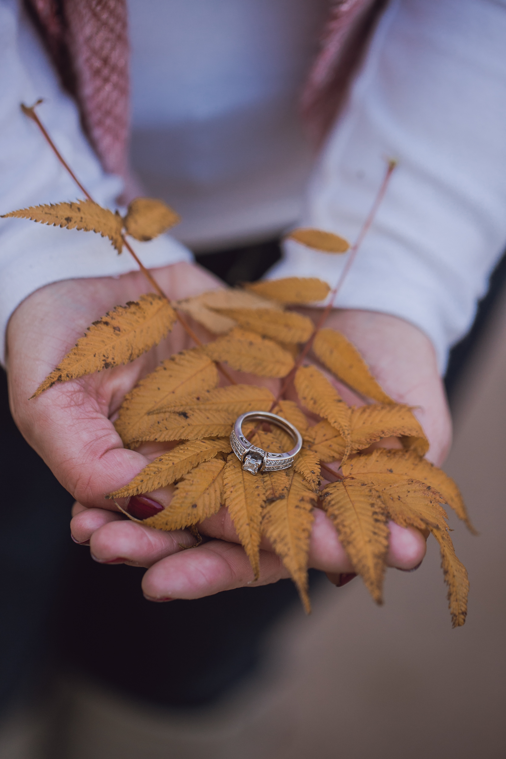 ring-fall-leaves