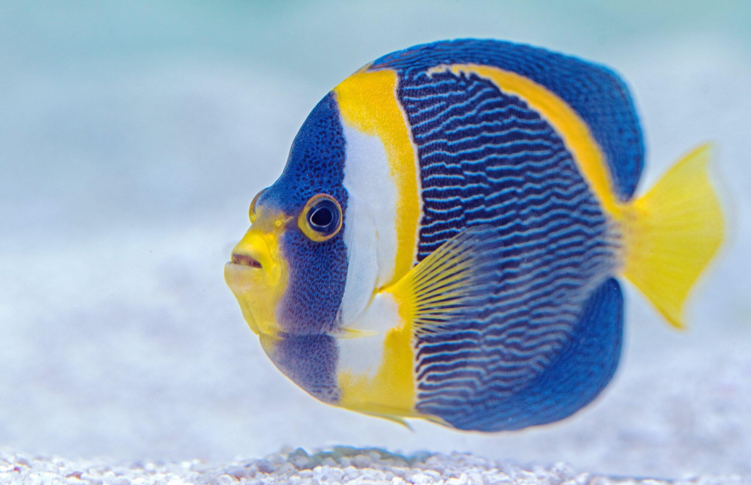 der blubber blasen fisch fritz lustige kindergeschichte