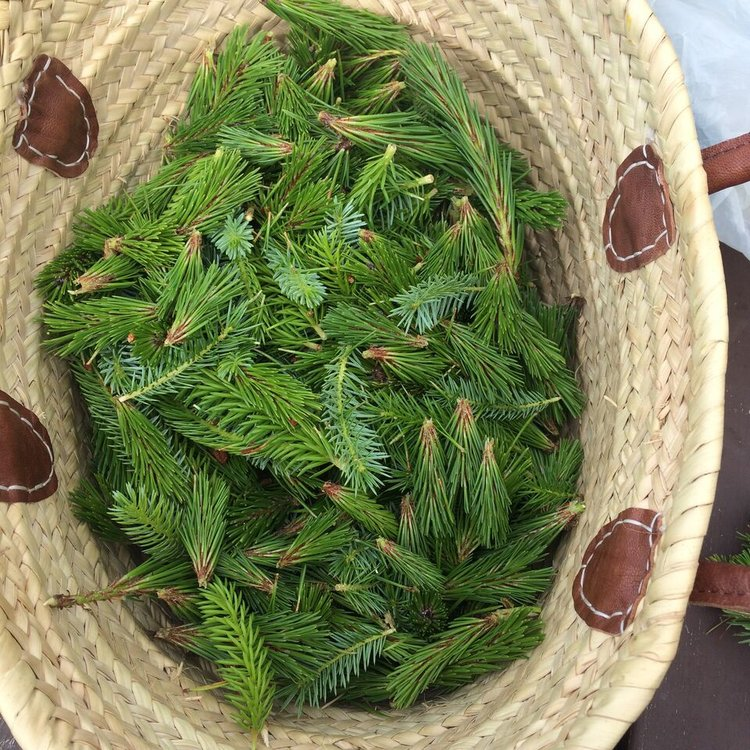 OUR SPRUCE