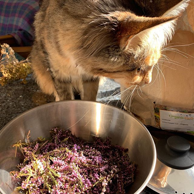 PickIng the flowers off heather with the help of Kitty Morag :)