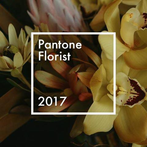 DigiTech Australia client - Pantone Florist.jpg