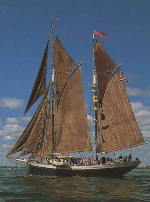 The Angelique