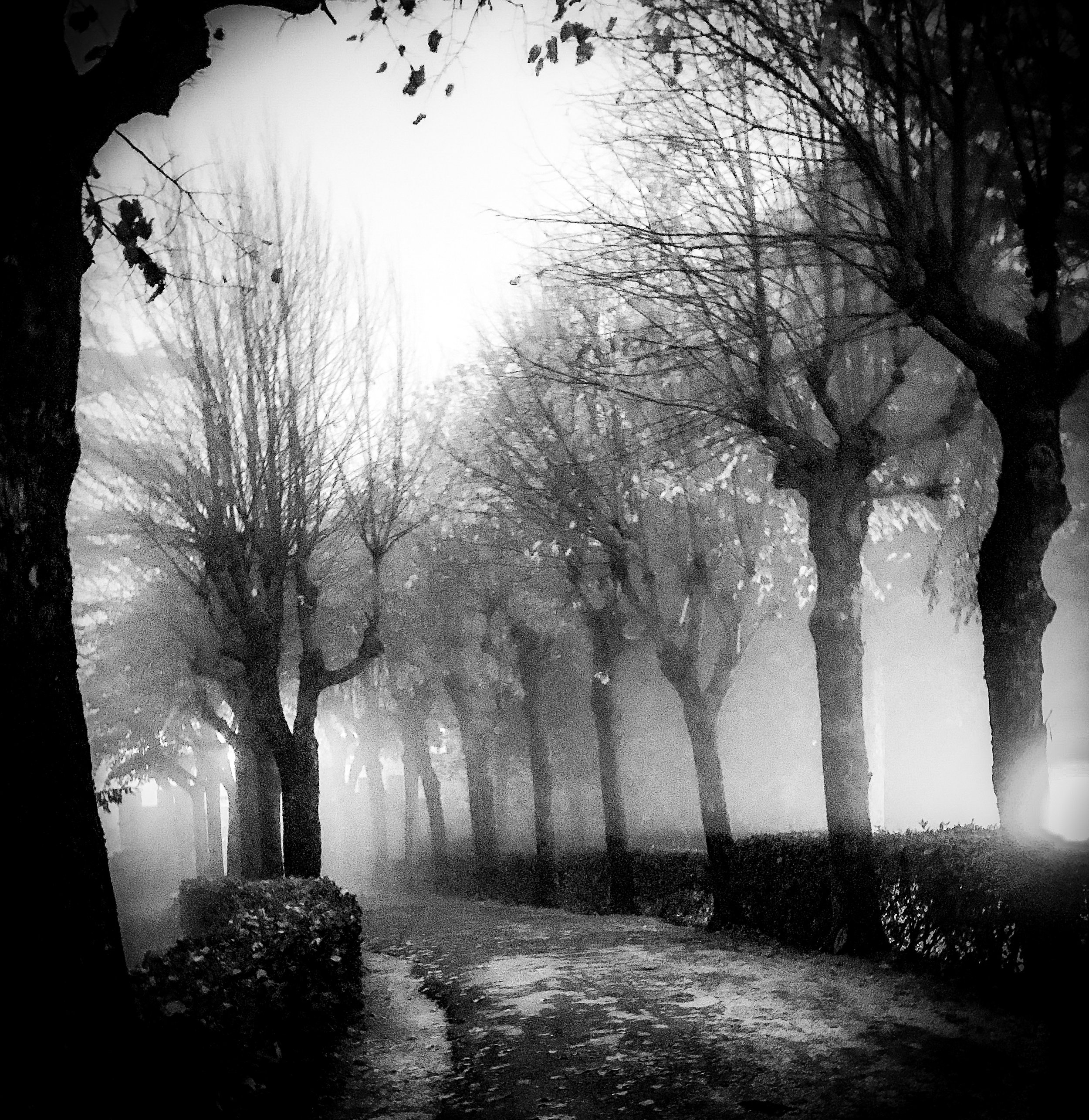 Fog Trees.  A man is a tree / silhouette   of a bare tree / the sun cries shadows   over  / the furrows the crows glean  I remember the earth   loves us a little while we are here.