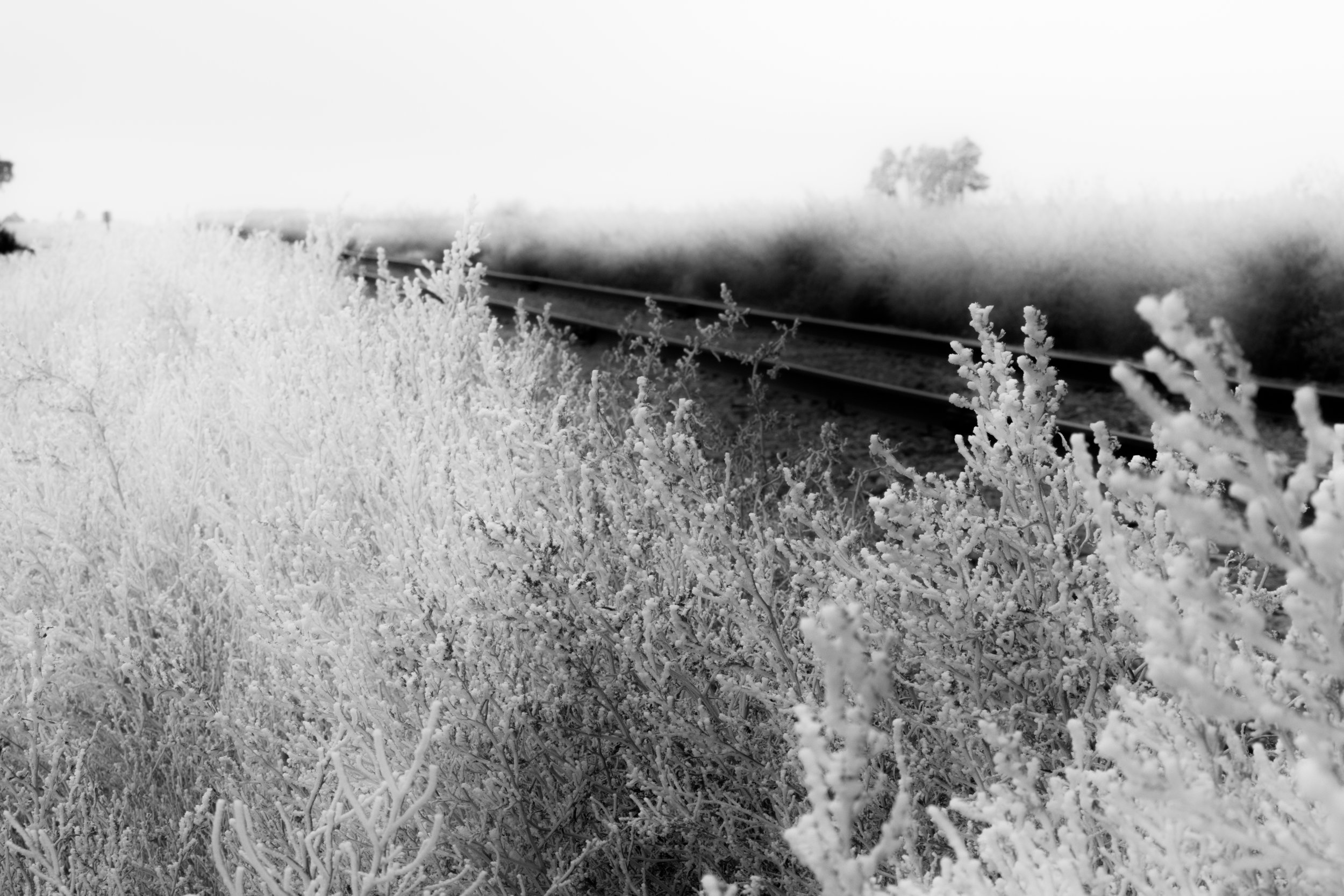 kansas frost with tracks and tree.JPG