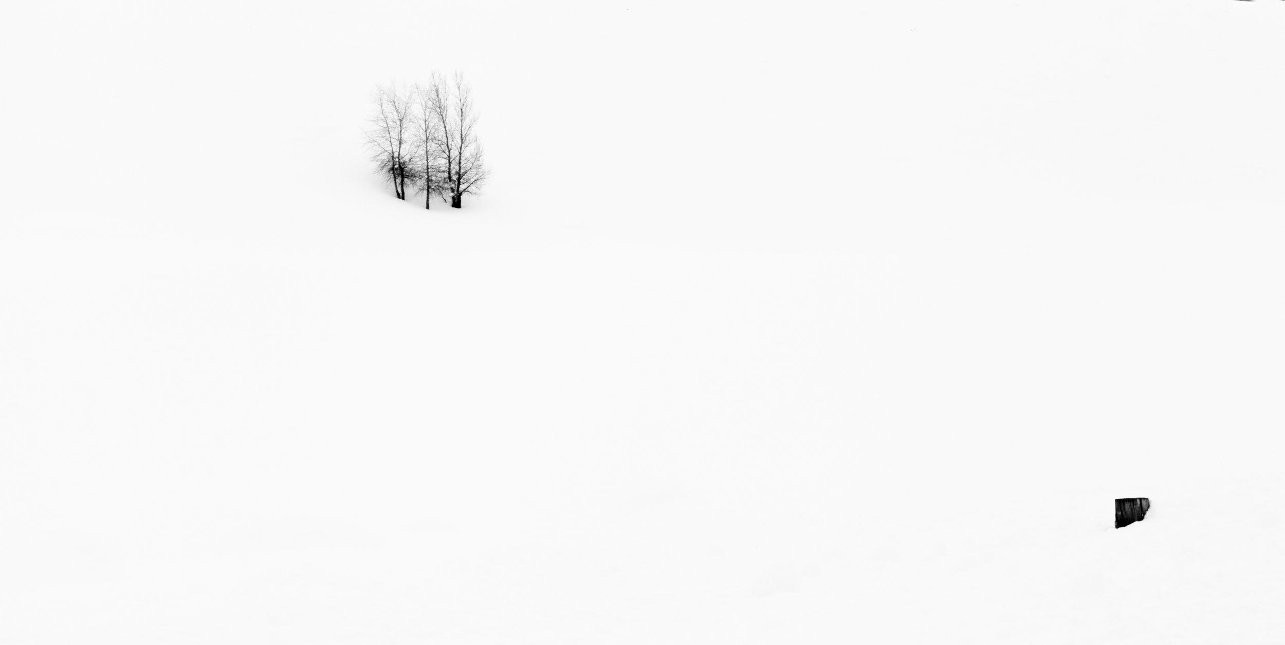tree fence post hill snow.JPG