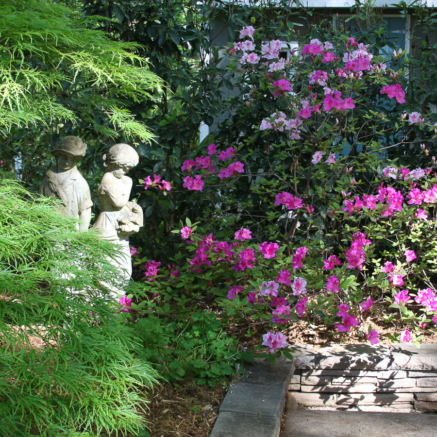 Cary-statues-and-pink-azaleas (1 of 1).jpg