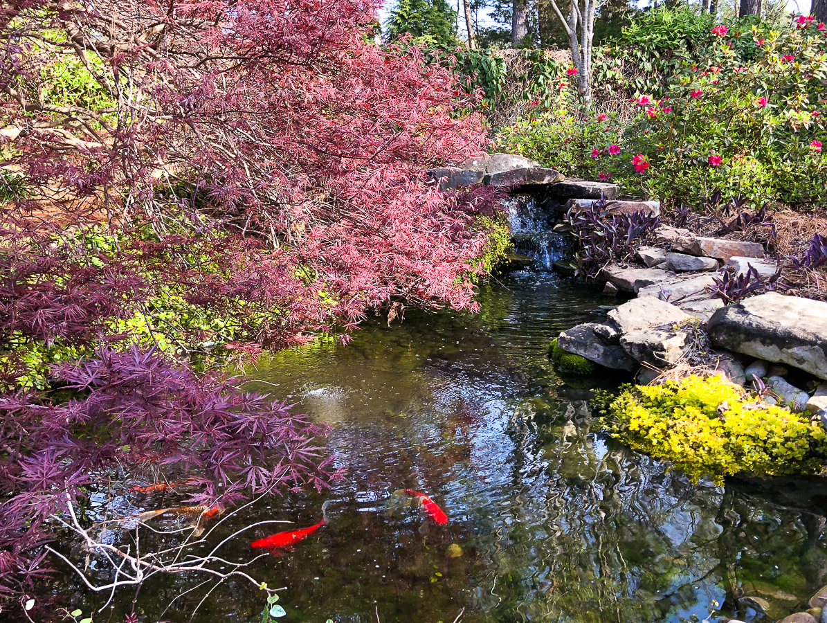 Johnston-garden-waterfall-with-koi-pond (1 of 1).jpg