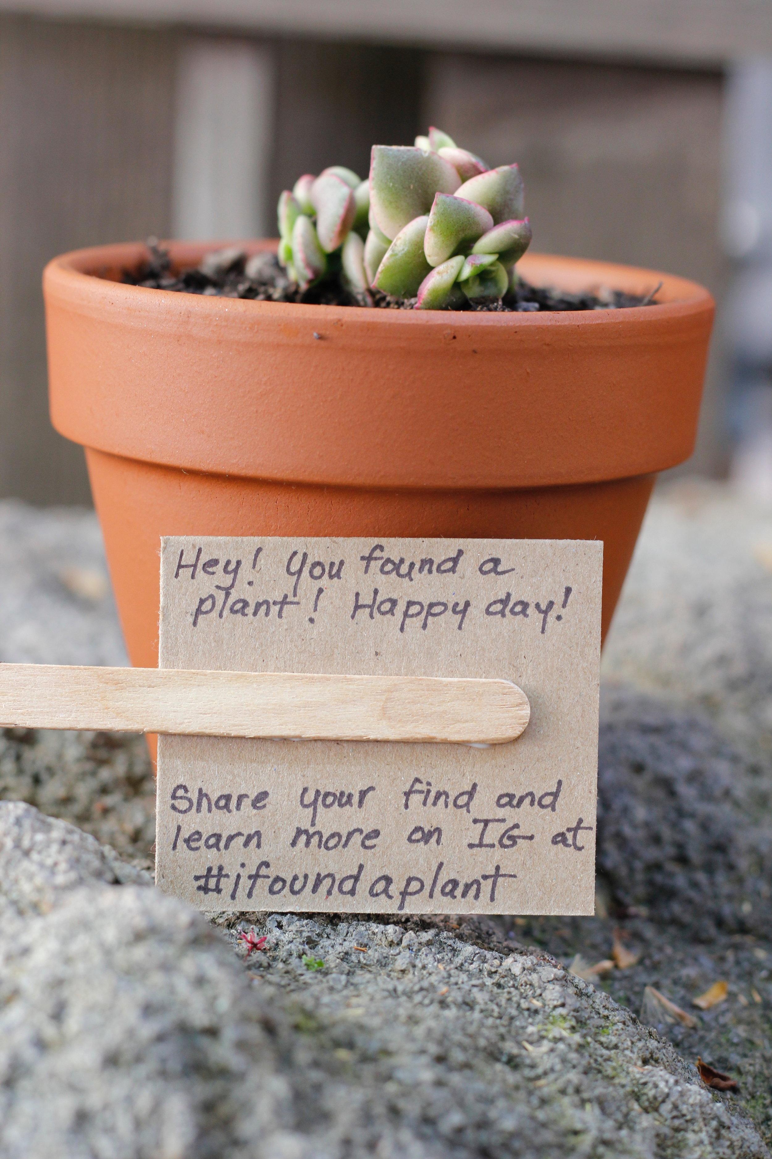 #ifoundaplant project explanation
