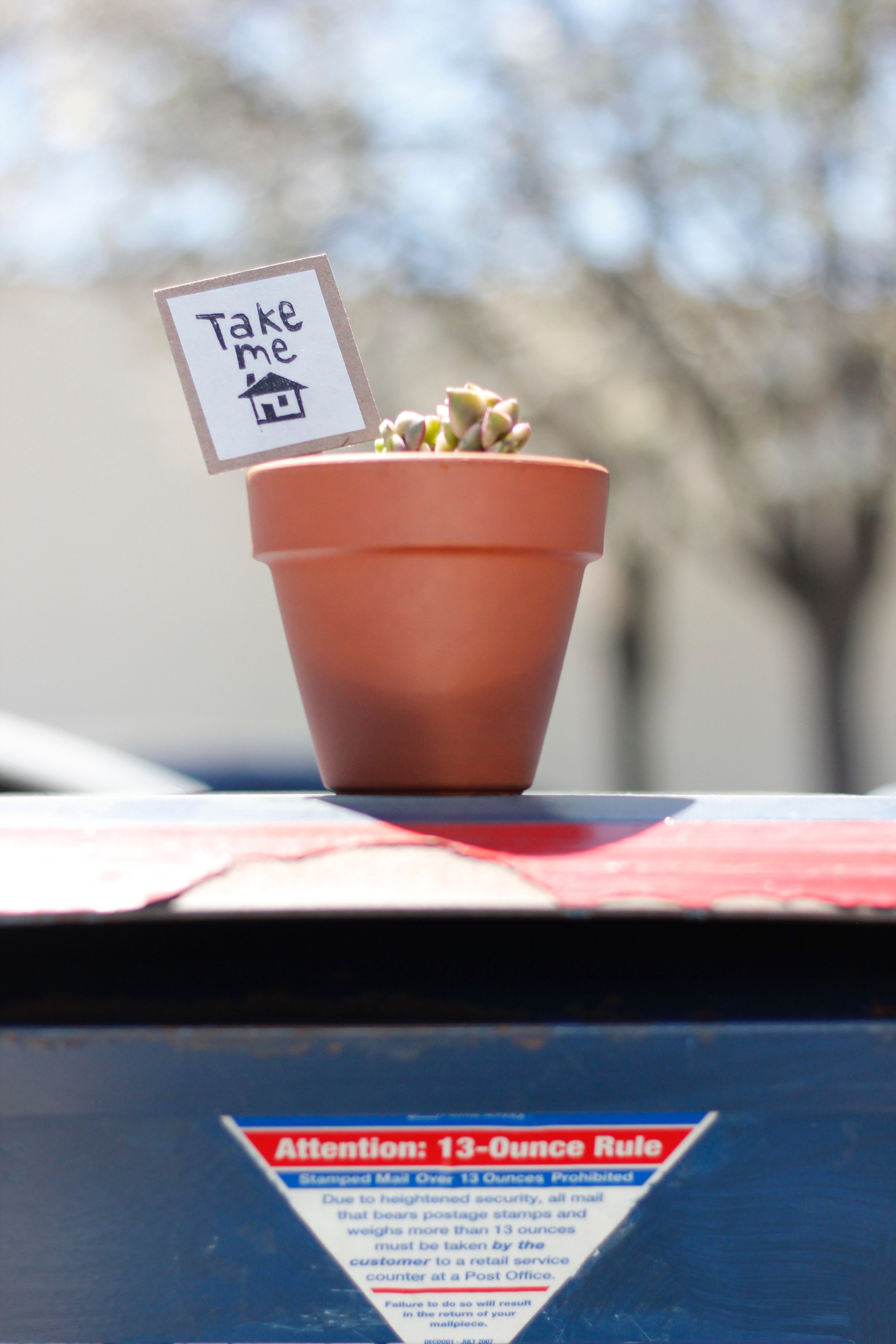 First plant drop for the #ifoundaplant project on a mailbox in downtown Mountain View