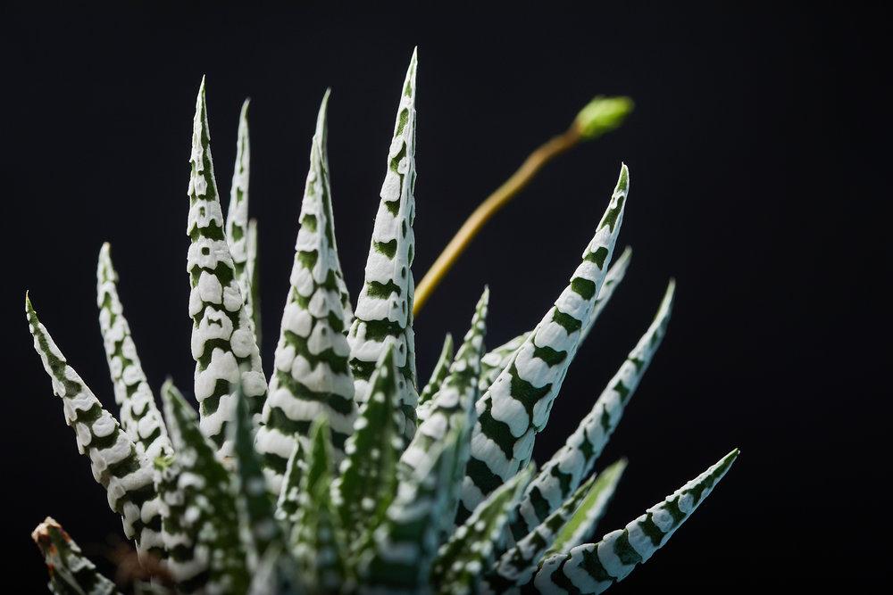 mai+09+2019-ipomea_plantesinterieur_-_MG_8709.jpg