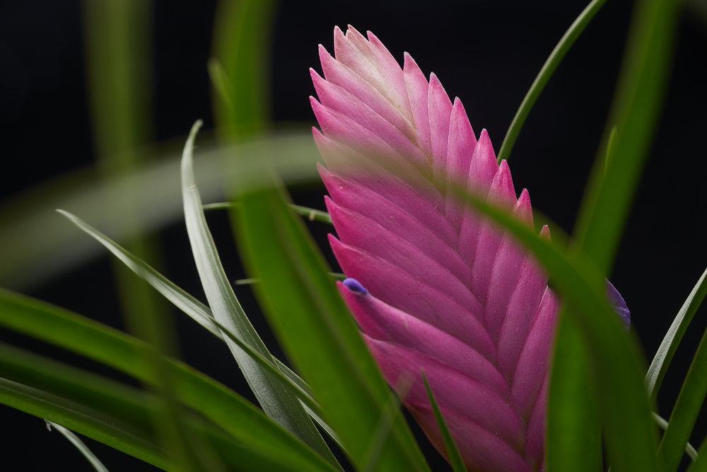 mai+09+2019-ipomea_plantesinterieur_-_MG_8853.jpg