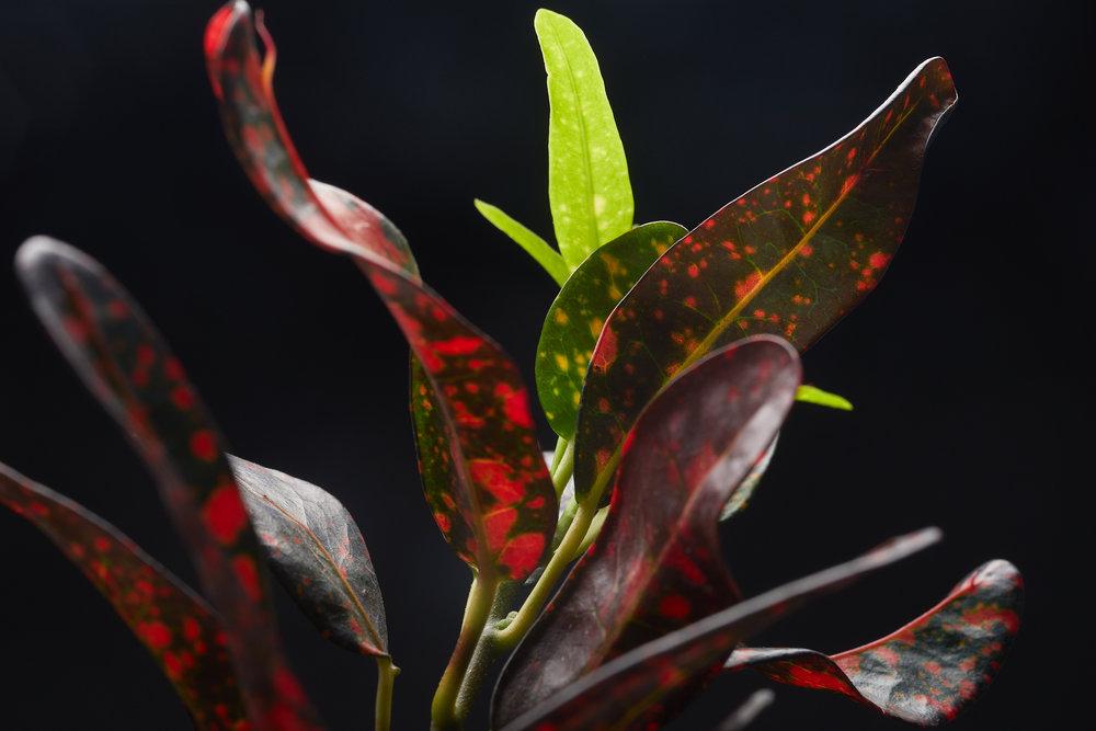mai+09+2019-ipomea_plantesinterieur_-_MG_8871.jpg