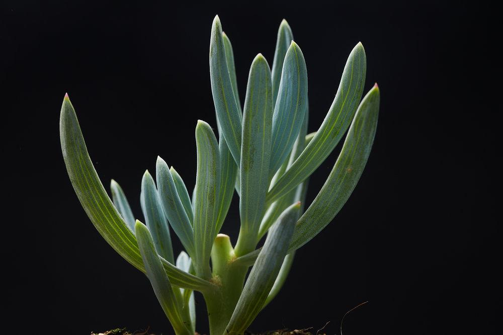 mai+09+2019-ipomea_plantesinterieur_-_MG_8790.jpg