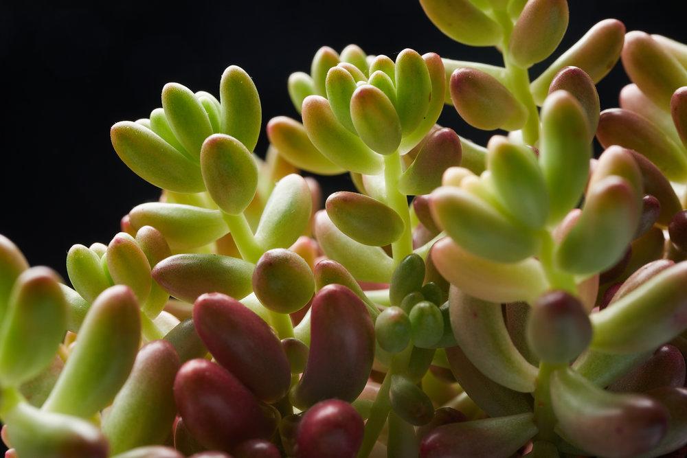 mai+09+2019-ipomea_plantesinterieur_-_MG_9050.jpg
