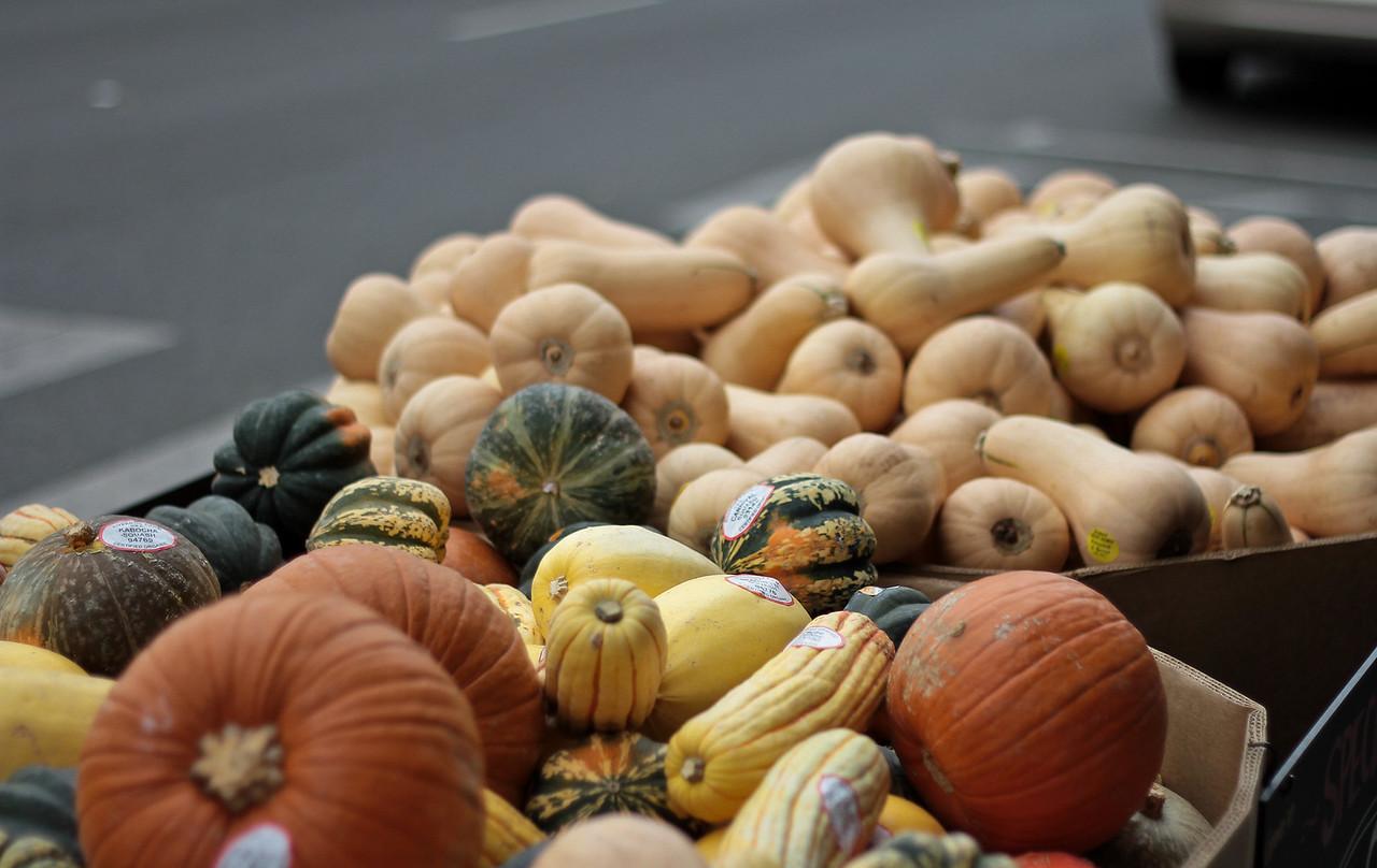Campbell Pumpkins.jpg