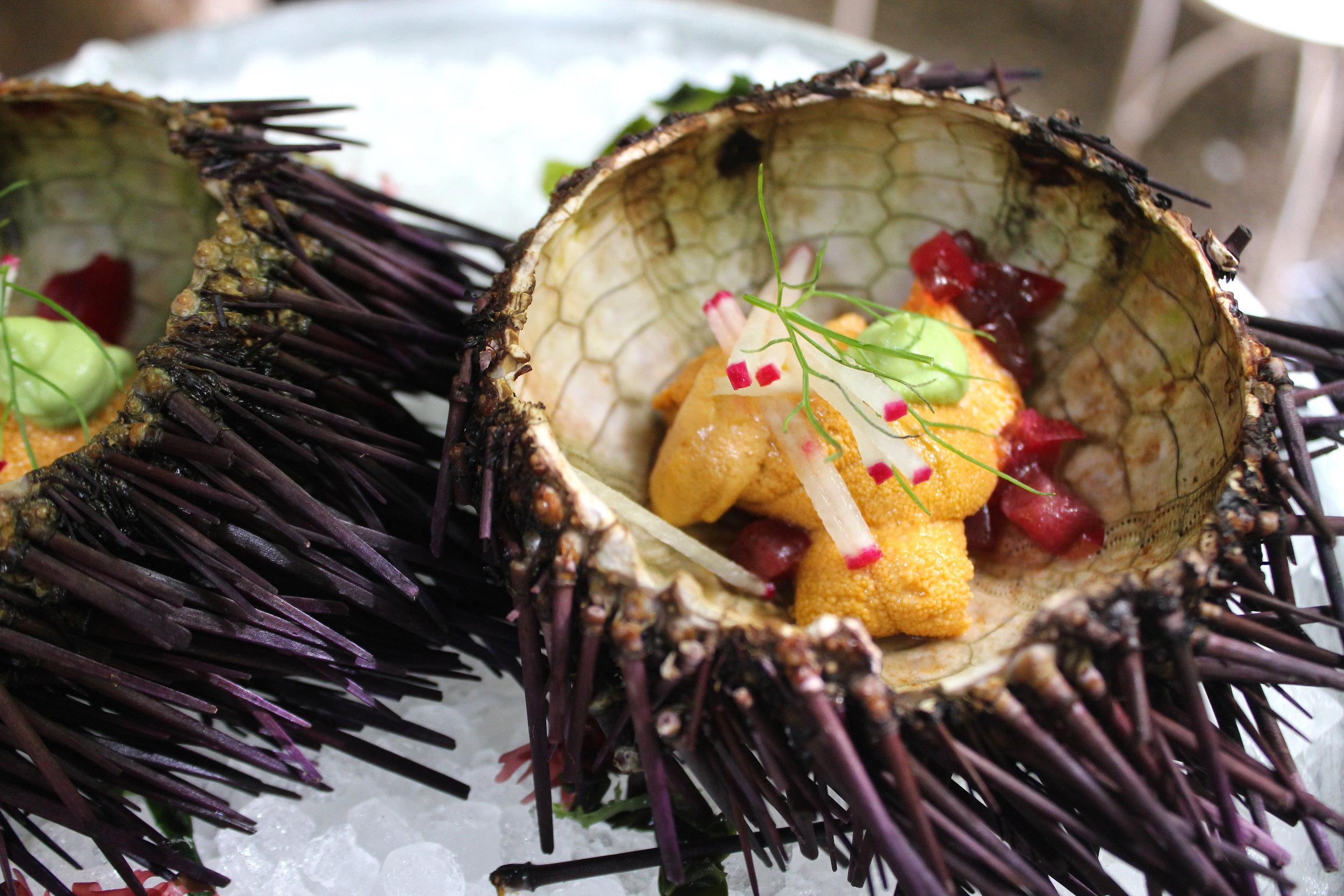 Sea Urchin at Maison Premiere