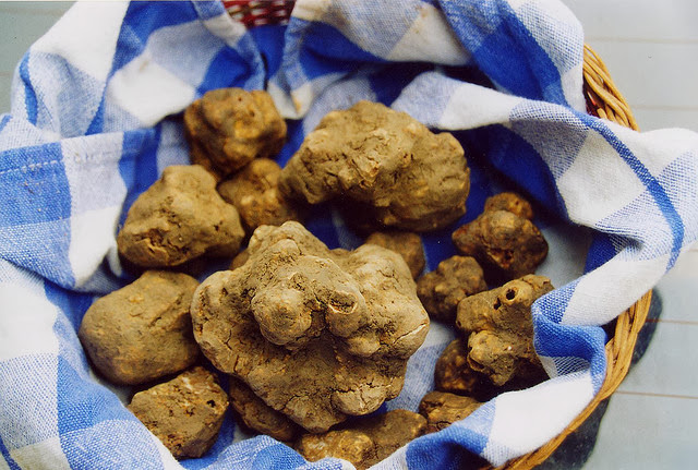 White Truffles. Source:  Tuscanycious