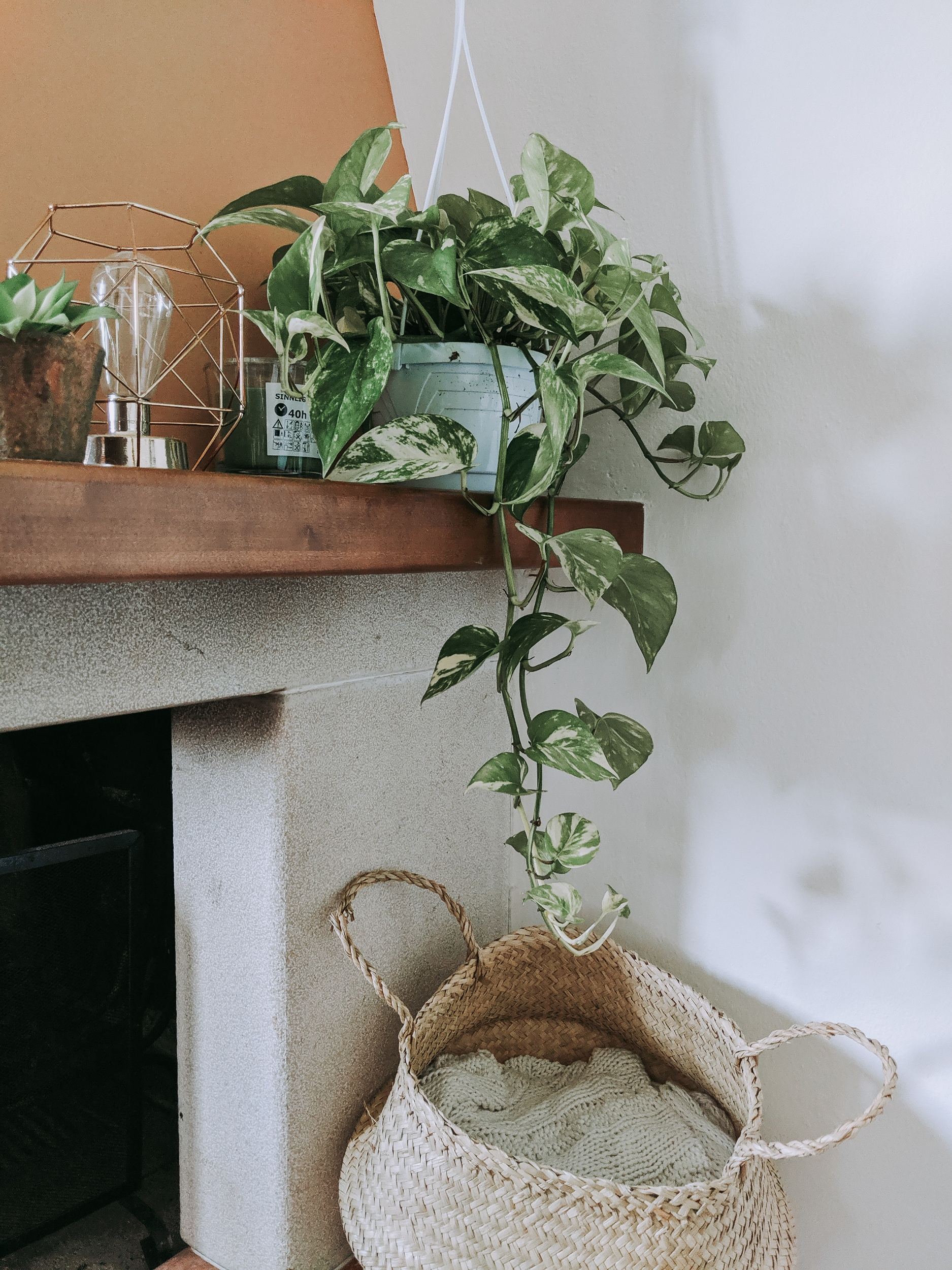 Golden Pothos on top of fireplace.