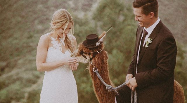 Real talk... Is anyone else as bad as me when it comes to posting on social media? 😂🤦🏼‍♀️ Anyways. Here's a llama from Kendal and Nicks wedding -- such a beautiful day, such a rad couple🎩✨